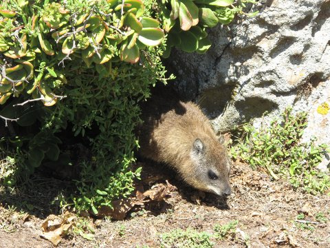 Lots of Dassie's as well